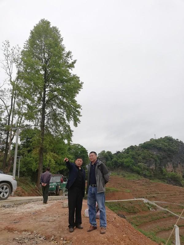 罗扬院长赴望谟、平塘调研林业科技支撑工作